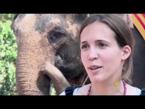 فيلة كمبوديا السياحية تتعرض للخطر