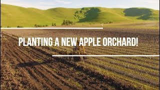 Planting a new apple orchard!