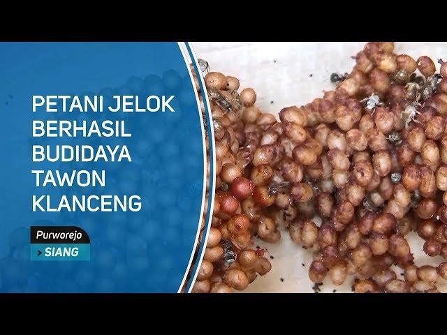 Petani Jelok Berhasil Budidaya Tawon Klanceng