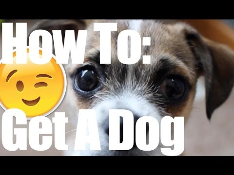 How To Convince Your Parents To Get A Second Dog