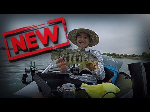 Fishing **NEW** Major Craft JigPara Spins!! -- QUARANTINE CHRONICLES (Float Tube Fishing)