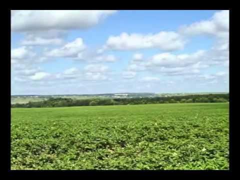 Organic in Ukraine on radio kolos