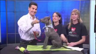 Pets on Parade 08-22-2015 with Brandon Lee