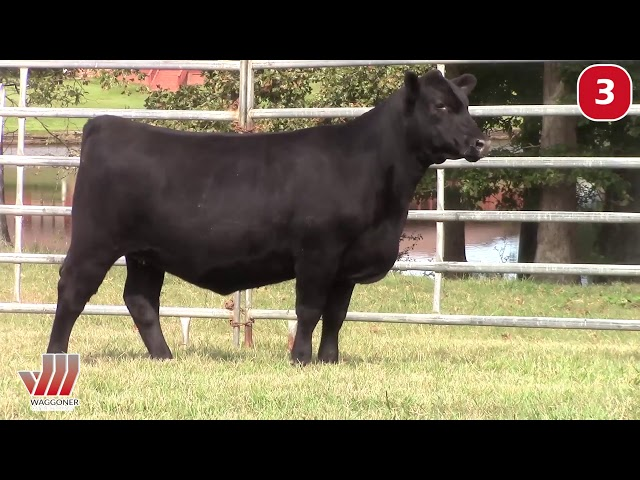 Waggoner Cattle Co. Lot 3