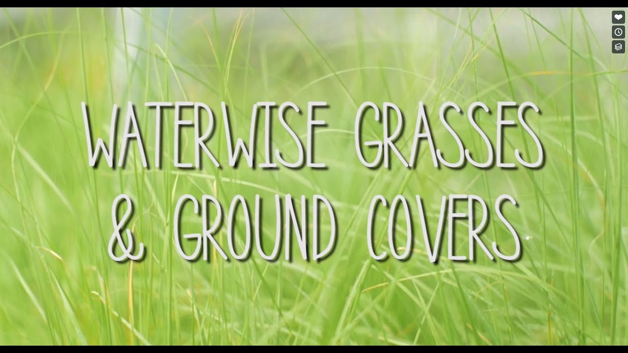 Waterwise Grasses & Ground Covers | Plant California