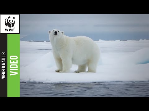 Zet De Aarde op 1 voor de ijsberen!