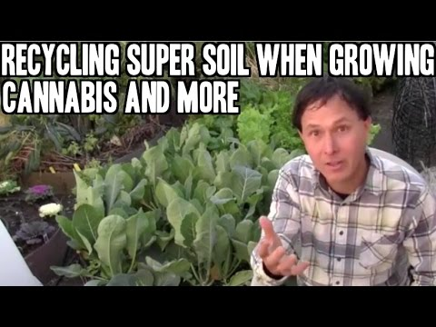 Recycling Super Soil When Growing Cannabis & more Gardening