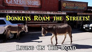 Donkeys Roam the Streets! - Living On the Road