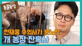 한재웅 수의사의 분노를 일으킨 '개 농장 잔혹사' 비하인드스토리 I TV동물농장 (Animal Farm) |…