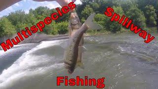 Multi-species Spillway Fishing (Skunk River, Ames, Iowa)