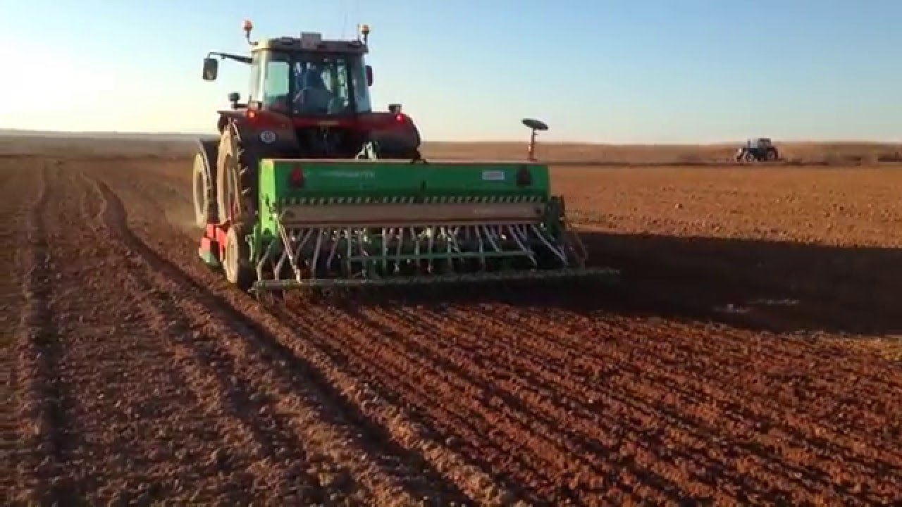 Resultado de imagen para siembra de trigo