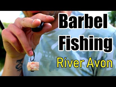 Barbel Fishing The River Avon