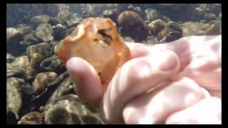 NSW Gem Fossicking Snorkeling - Gorgeous Orange Agate