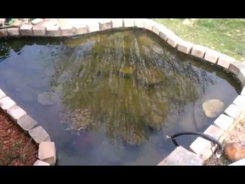 Koi pond algae problem youtube for Keeping koi in a pond