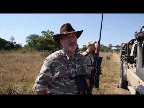 Wild Safari Africa Epi 3 of Season 2, Limpopo tough old Blesbok