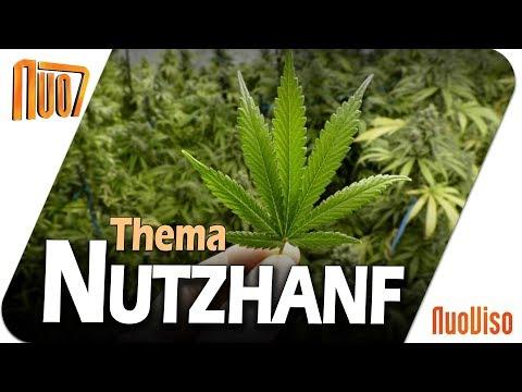Nuo7-Thema: Nutzhanf
