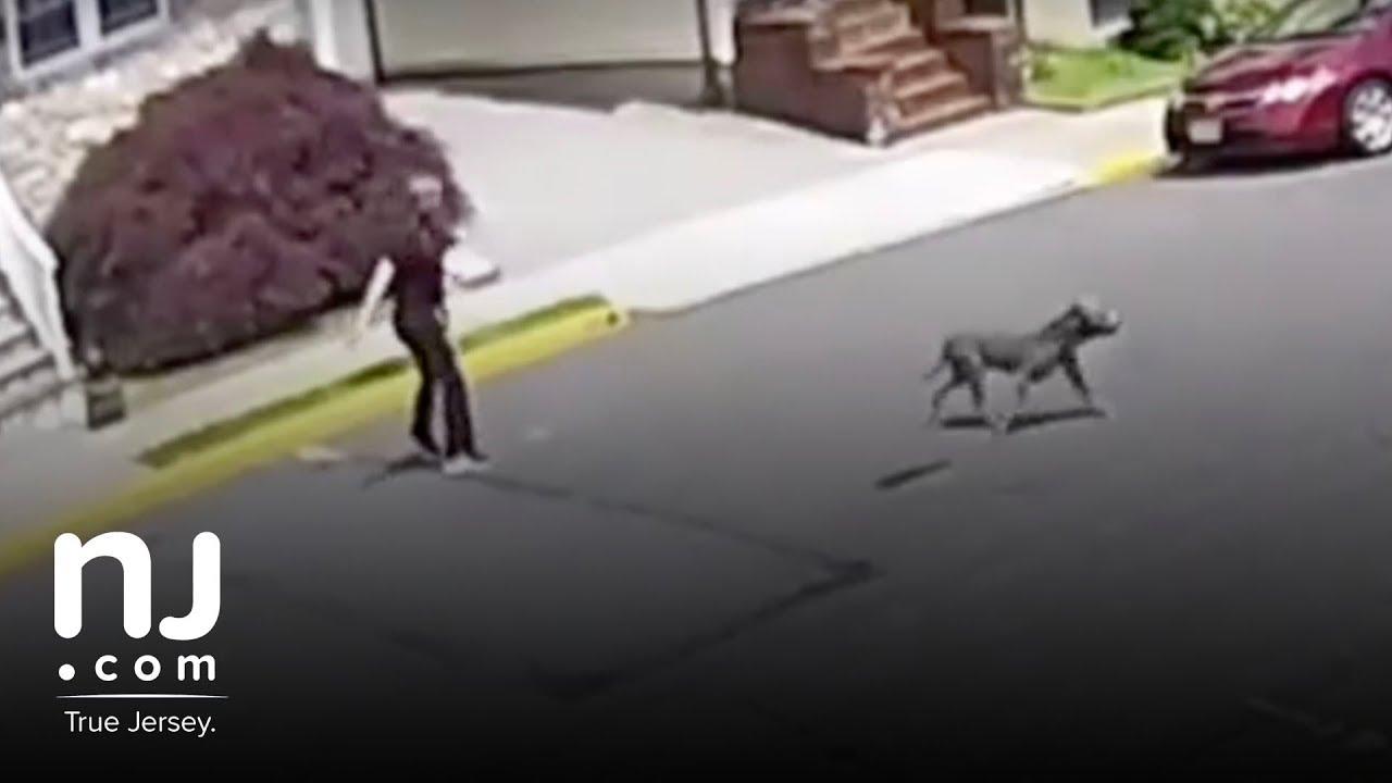 Abandoned pitbull attacks family dog in Carlstadt