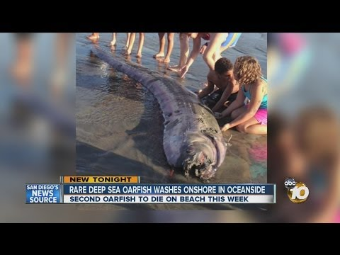 Rare oarfish washes ashore in Oceanside