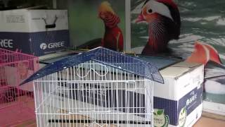 Cage Size for 2 Budgies | Best Cage for Budgies Parrot (Urdu/hindi)