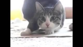 Кот танцор ржач(Прикол про кота видео не моё но скачивал я не оригинал :), 2014-12-31T15:49:50.000Z)
