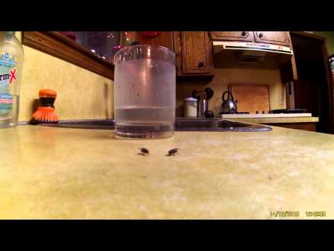 Bug-a-Salt close up fly shot