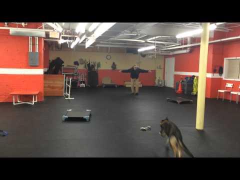 remote-collar-recall-drills-dog-training-gsd