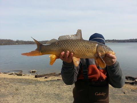 Lake Ronkonkoma - Fishing (Carp) #1
