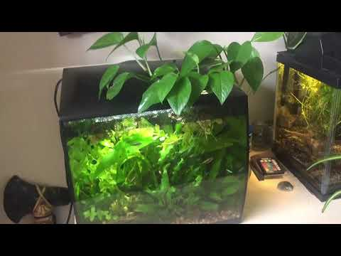 How To Keep A Heavily Stocked (Overstocked) Aquarium    71 Sub Special