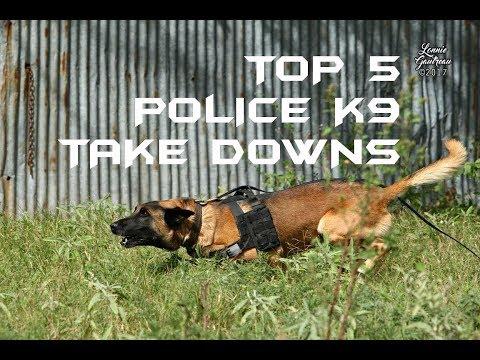 Top 5 Police K9 Take Downs