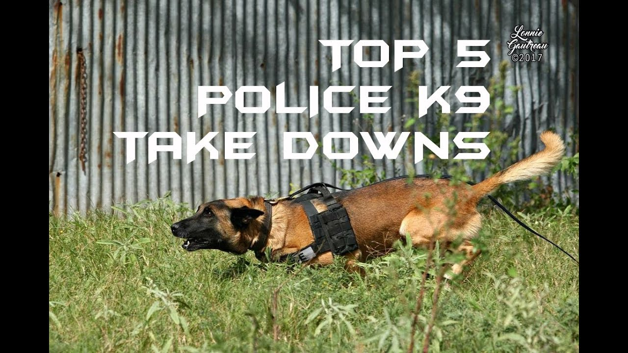 Download Top 5 Police K9 Take Downs
