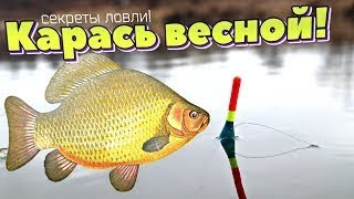 Мартовский Крупный Карась на Фидер Fishing for Karas in March