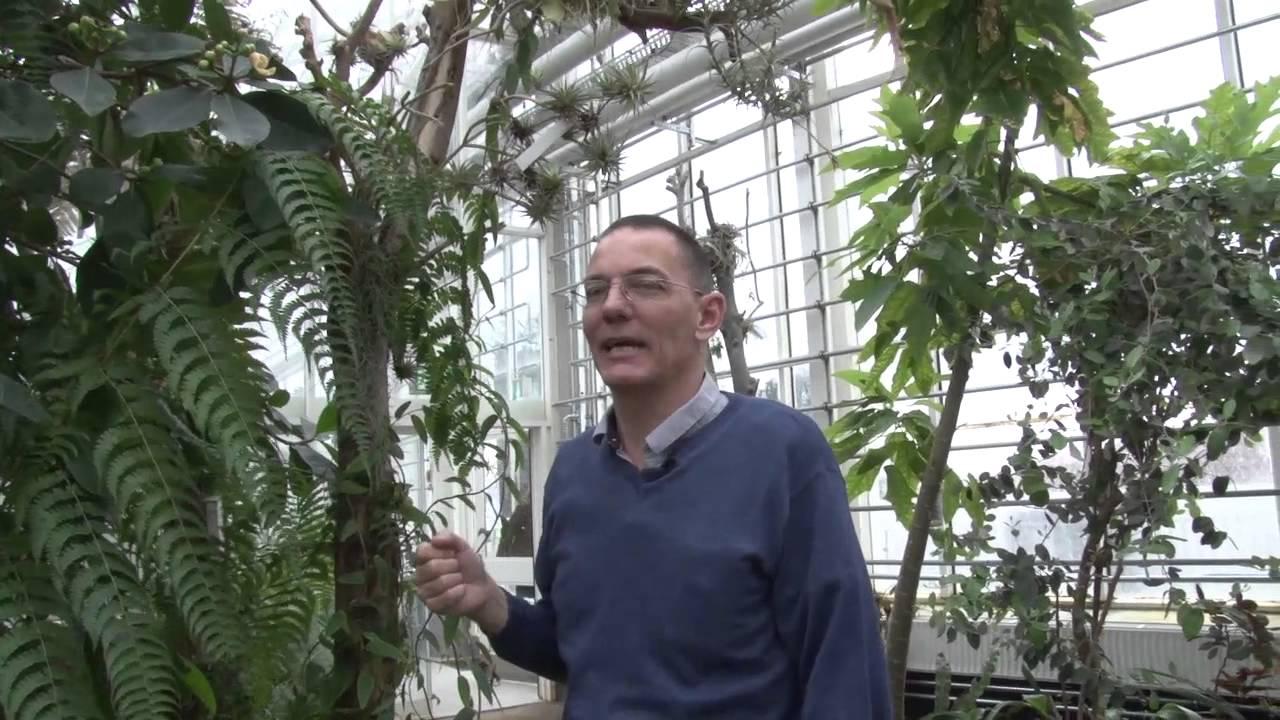 Smugkig I Væksthusene I Botanisk Have Youtube