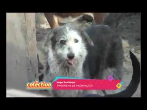Apadrina un San Roquitoиз YouTube · Длительность: 4 мин54 с