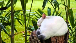 Delta Brain waves Zen Music: Singing Bowl, Rain on tin roof and Cat purring