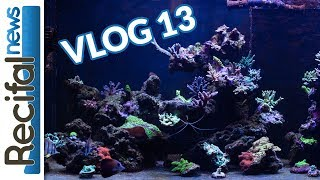 [VLOG#13] Vince Z : du neuf dans l'aquarium red sea !