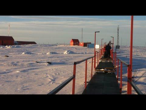 Base Esperanza (Antartide) pinguini 23 gennaio 2013