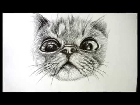 drawing to cat ศิลปะการวาดภาพลายเส้นเจ้าแมวตัวน้อย..กำลังทำหน้าทะเล้น..
