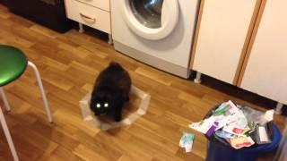 кошка сидит в нарисованном круге
