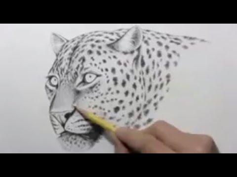 تعليم رسم النمر باقلام رصاص في اقل من ثلات دقائق Youtube