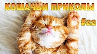 Смешные Кошки 2016! (#22) Веселая Видео Подборка! Смешные Животные 2016
