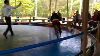 Медведь на велосипеде. Нячанг. Остров орхидей(, 2015-05-29T15:02:20.000Z)