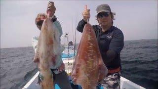 【沖縄ルアー】K701でディープエギング。Bigfin reef squid fishing.