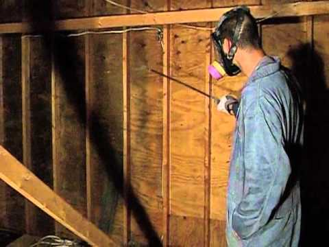 Cleaning Attic Mold Youtube