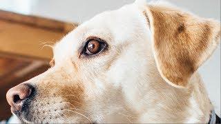 Antes de regañar a tu perro PIÉNSALO 2 VECES. Esto es lo que en realidad PASA POR SU MENTE