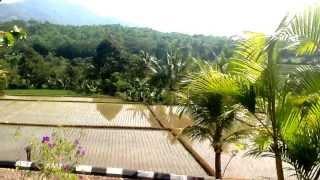 In Indonesia rice farm