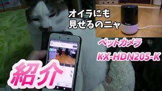 【猫】家で使ってるペットカメラを紹介