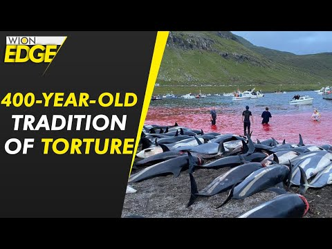 1500 dolphins killed in largest massacre in Denmark | WION Latest News | English News