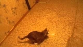 Кот после операции (2-ой день)
