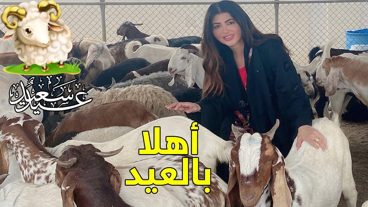 اشتريت الخروف من المدبح(مقصب دبي) و ما طلعش خروف| مواصفات الأضحية الصحيحة | ريهام في دبي