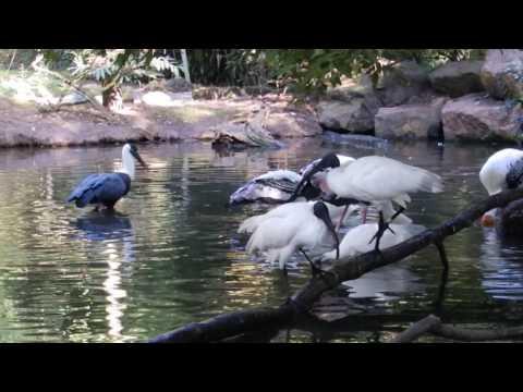 Asiatic wetland aviary Rotterdam Zoo